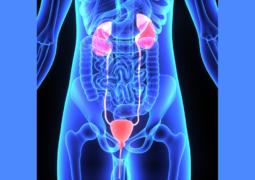 ipertrofia prostatica benigna cause e cure